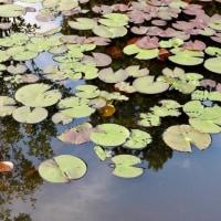 『じゅんさい池』