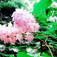 あなたへの歌🎵A song for Miluku