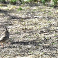 野生動物&小鳥
