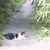 「飼っていない猫をつかまえて、獣医さんに持って行こう」な補助事業