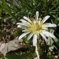 春の植物ズ