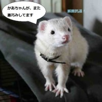 わりぃね^^;