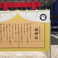 """"""" 猫レクション """" に行ってきました (*^o^*)"""
