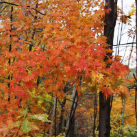 旭山公園の紅葉