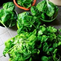 緑の恐怖~葉物野菜大量収穫