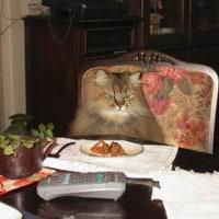 愛猫フィガロの死?
