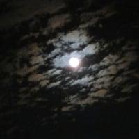 昨夜みた月