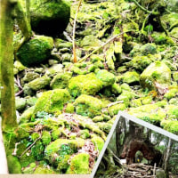 美しい屋久島。もののけ姫の白谷雲水峡へ。*美バレエ・エクササイズ