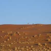 「東南アフリカ」編 ナミビア共和国 ナミブ砂漠3