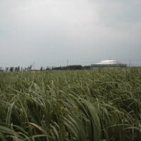久米島 楽天のキャンプ地(2)