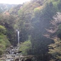 早朝の須津川渓谷:ヤマザクラと大棚の滝