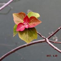 ため池の淵の美しき彩!