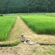 草刈り機復活