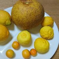 冬の果実を堪能