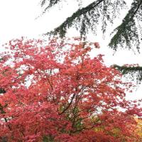 ロキ・シュミット庭園の紅葉