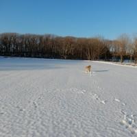 雪を求めて・・遊び場所見つけた!