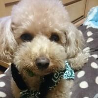 だれか~!!! -タロちゃん劇場