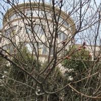 「花開く樹々」No.1897