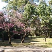 舞鶴公園(福岡市中央区にある福岡城の本丸址を中心とする公園)梅園にて