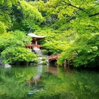 京都・醍醐寺の新緑