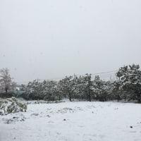 54年ぶりの11月の初雪・・・