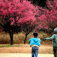 梅咲いた春よ来い