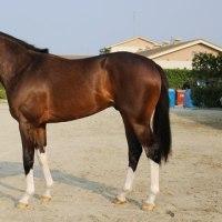 むーたん厩舎:2歳新馬戦1番乗りはロードマドリード♪♪