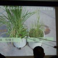 自給稲作セミナー 美味しいお米を育てよう!(自然農法センター)