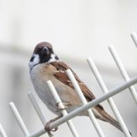 大磯市のついでに大磯港で野鳥探し