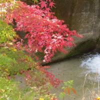 京都の白い川 「白川」