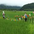 くるみちゃんの田んぼも写真スポットに(北海道沙流郡日高町千栄地区)