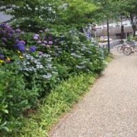 久々に岐阜駅前〜清水緑地に来ました。あすか