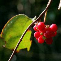 赤い実や秋色に染まった葉