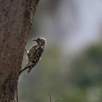 3月25日の鳥撮り散歩・・・