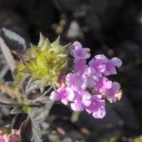 寒さの中の 花たち