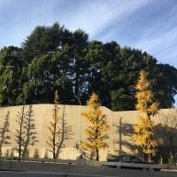 銀座から六本木