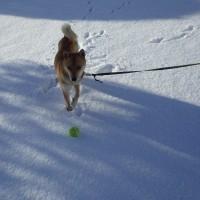 雪上のボール遊び