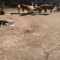 ハイパークの動物園