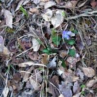 さあて、メンタル補強の2017山陰の春ジョグ4