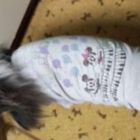 Tシャツ・その2