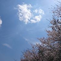 陽だまり農園4月16日