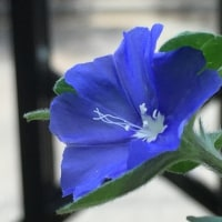 幻惑する花