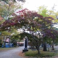 千秋公園ちょこっと散歩