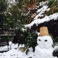 積雪14センチ♪