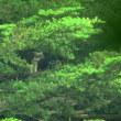 20170723山のクマタカ(西尾根から巣を見る)