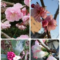 「 春 」♡