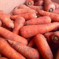 有機ニンジンと自然栽培の菊芋入荷しました~~