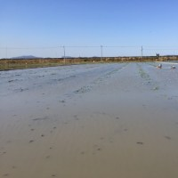 くわ掘りの田んぼ、水入れ
