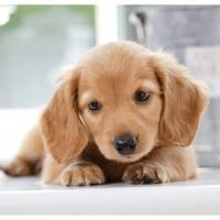 行列ができる「ペット撮影相談所」可愛く、カッコよく撮る秘訣を解説します。