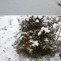 今朝の雪景色(津市美里町三郷)
